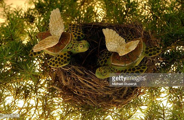 TORONTO Ontario Two turtle doves for l2 days of Christmas Wings on wooden turtles in a bird's nest