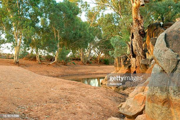 Oonartra Creek with old growth River red gum , riparian fringe. Boolcoomatta Bush Heritage Australia Reserve, northeastern South Australia.