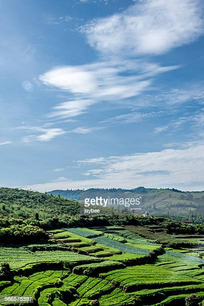 ooty - tamil nadu stock pictures, royalty-free photos & images