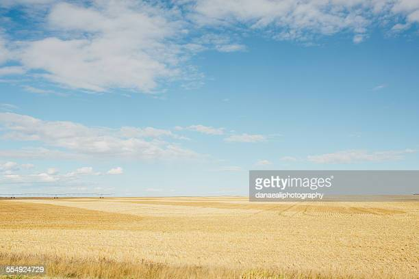 open blue - canadian prairies stock photos and pictures