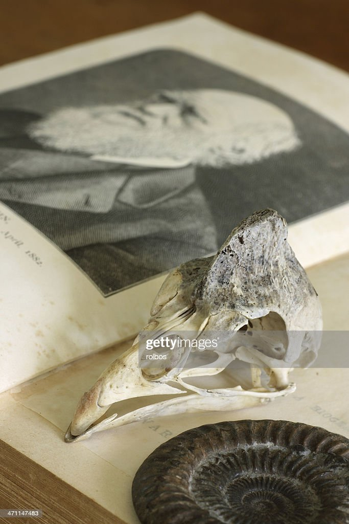 Open Charles Darwin book with guinea-fowl skull and ammonite : Stock Photo