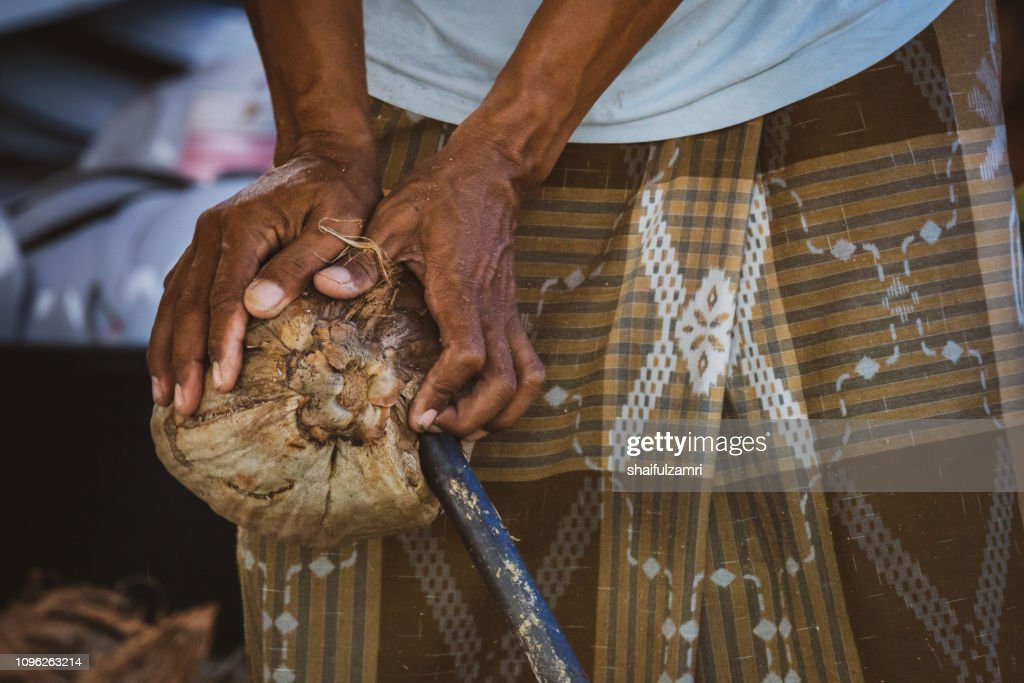 Open coconut in traditional way. : Stock Photo