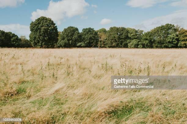 open field - saison photos et images de collection