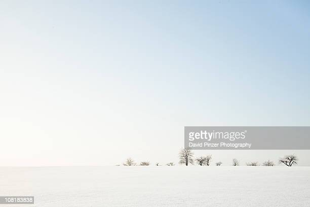 Open fields of snow