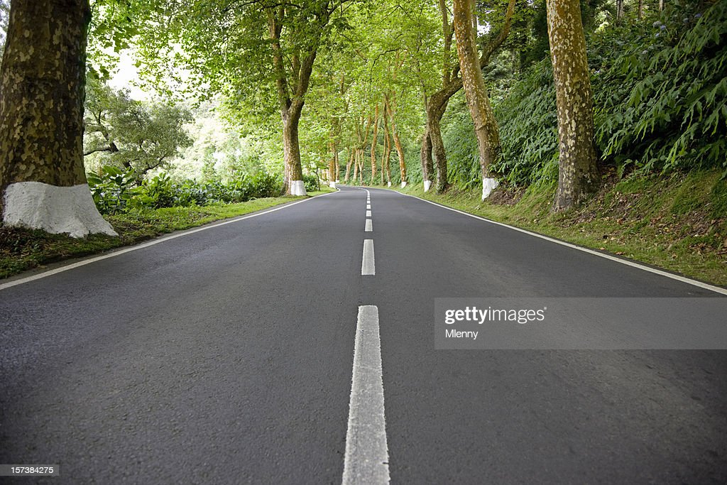 Open Forest Country Road : Stock Photo