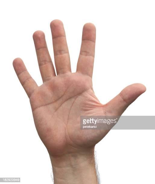 Open Hand   ( Isolated )