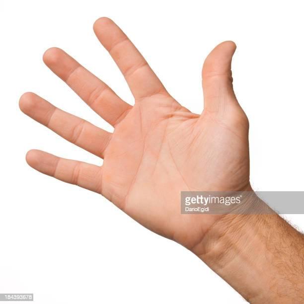 Abrir palma da mão masculino em fundo branco