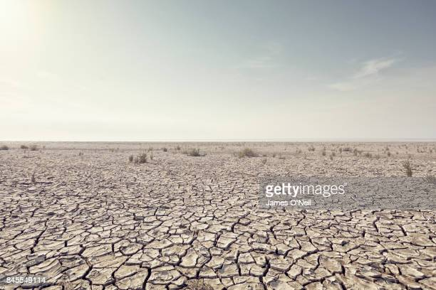 open plain with cracked mud clear