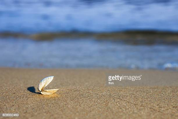 open seashell on the beach - clams stock photos and pictures