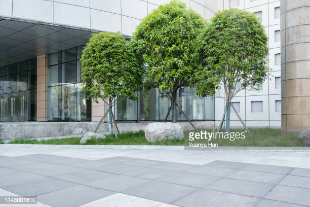 open space with trees in front of the office building - 中庭 ストックフォトと画像