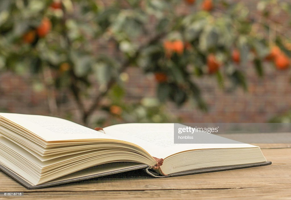 open the book in the nature : Stockfoto