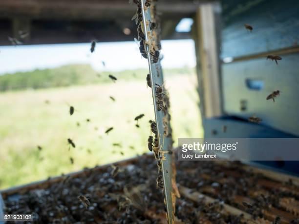Opened beehive