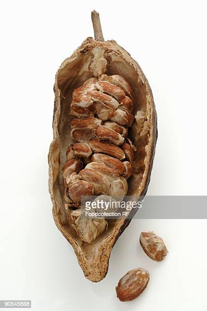 Opened cocoa fruit, overhead view