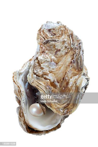 Opened oyster with pearl