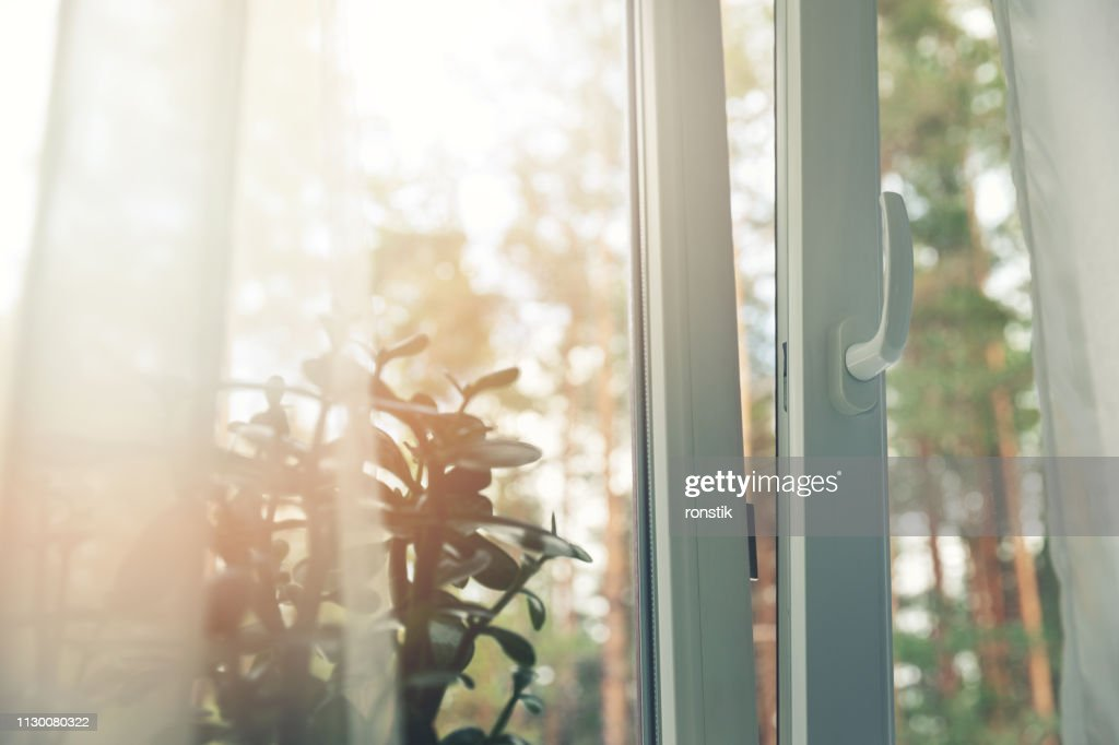 opened white plastic pvc window with forest background : Stock Photo