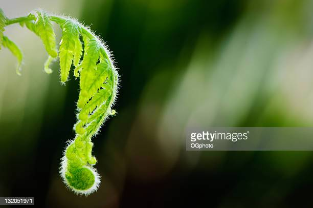 opening fern leaf - ogphoto stock photos and pictures