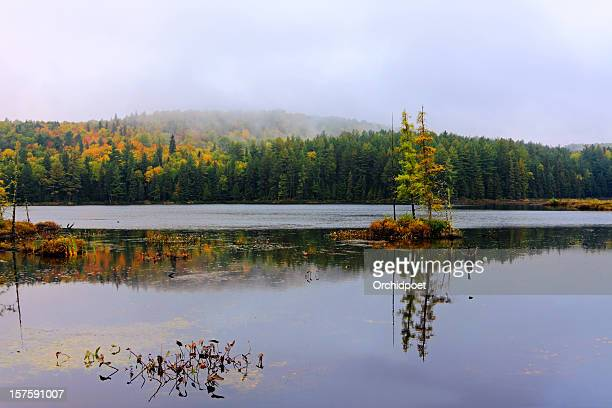 opeongo lake in algonquin - eastern white pine stock pictures, royalty-free photos & images