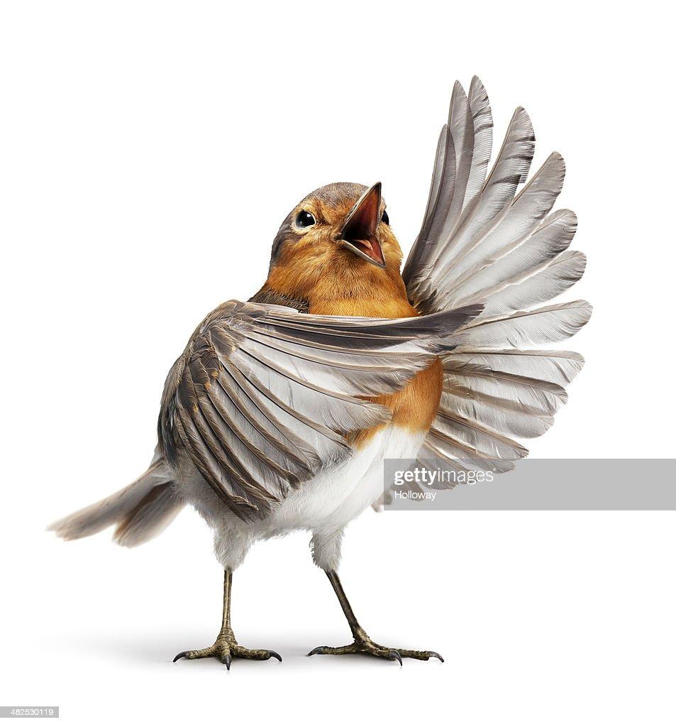 Opera bird 1 : Stock Photo