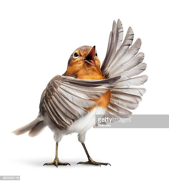 Opera bird 1