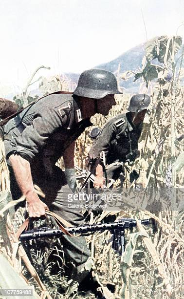 Operation Barbarossa Two soldiers are advancing in a corn field to get closer to enemy positions 1942 One is carrying a MG 34 with a tripod a German...