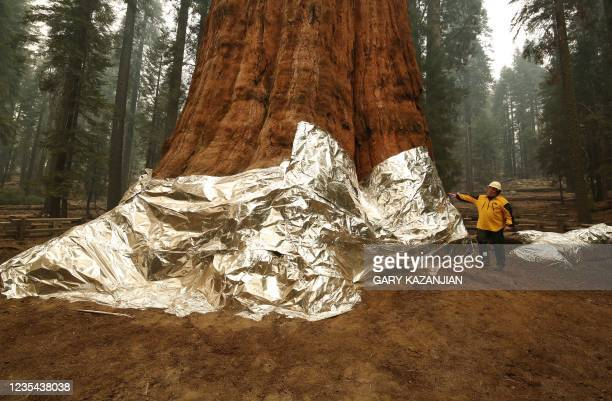 Operations Section Chief, Jon Wallace looks over General Sherman where the historic tree was protected by structure wrap from fires along with the...