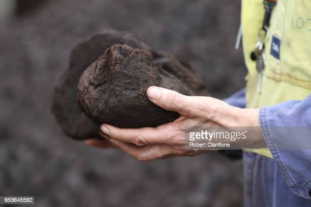 Operator Ron Bernardi holds brown coal on March 16 2017 in Melbourne Australia In November 2016 French owners of the Hazelwood Power Station Engie...