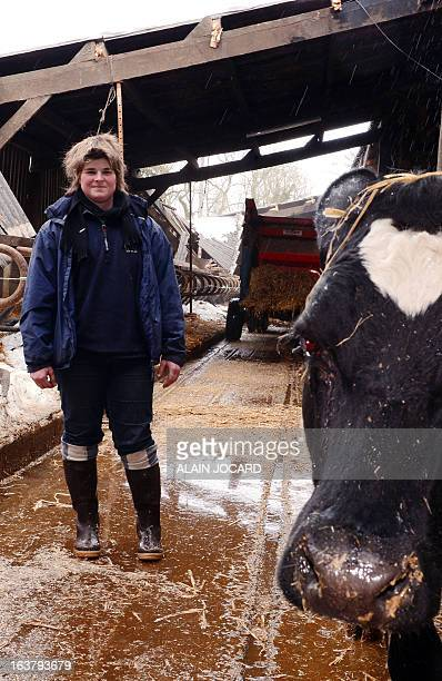 COUPEAU Ophelie Louis a 25 yearold farmer is pictured on March 15 2013 in Brix northwestern France in a stable partially collapsed by the weight of...