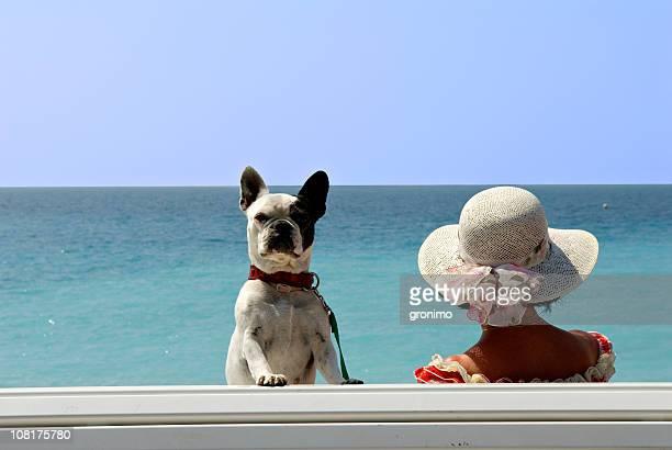ophélie - bulldog frances imagens e fotografias de stock