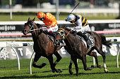 sydney australia opie bosson riding quick