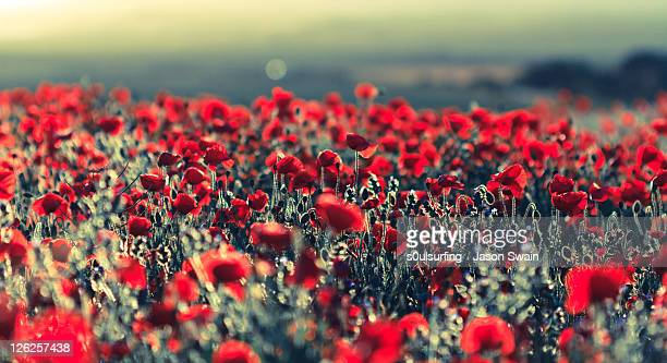 opium haze bokeh - s0ulsurfing stock pictures, royalty-free photos & images