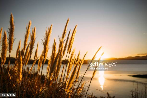 opononi sunset - northland new zealand stock pictures, royalty-free photos & images