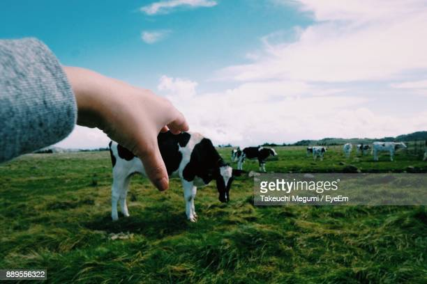 Optical Illusion Of Cropped Hand Holding Cow On Grassy Field