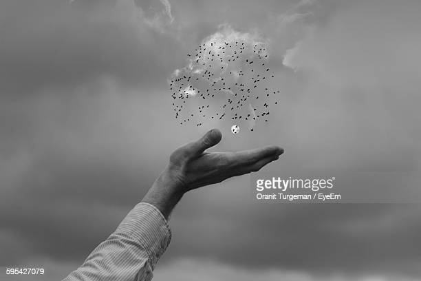 optical illusion of hand holding flock of birds against sky - optical illusion stock photos and pictures