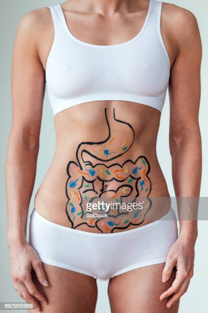optimum health - human intestine stock photos and pictures