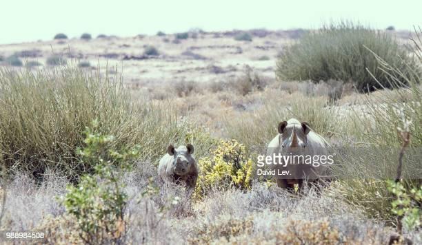 Opuwo,Namibia