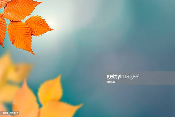 Orange and yellow autumn foliage on out of focus background