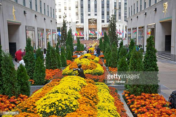 orange and yellow fall plantings in landmark plaza - rockefeller center stock pictures, royalty-free photos & images