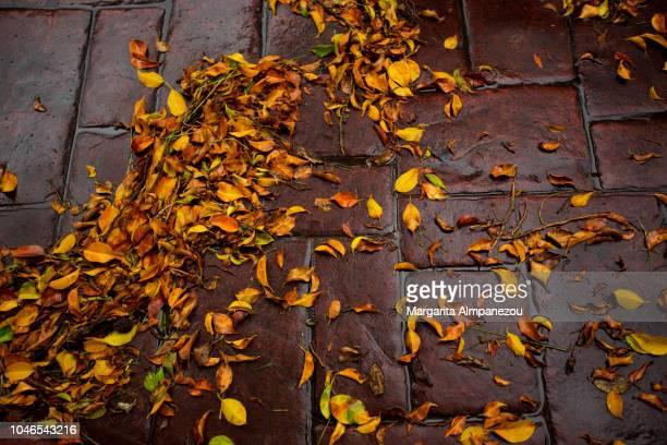 Orange and yellow leaves on wet cobblestone