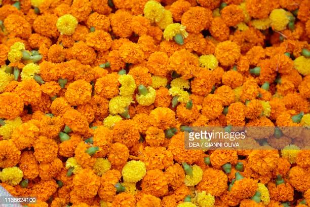 Orange and yellow marigold flowers used for making flower garlands Mullick Ghat Flower Market of Kolkata India