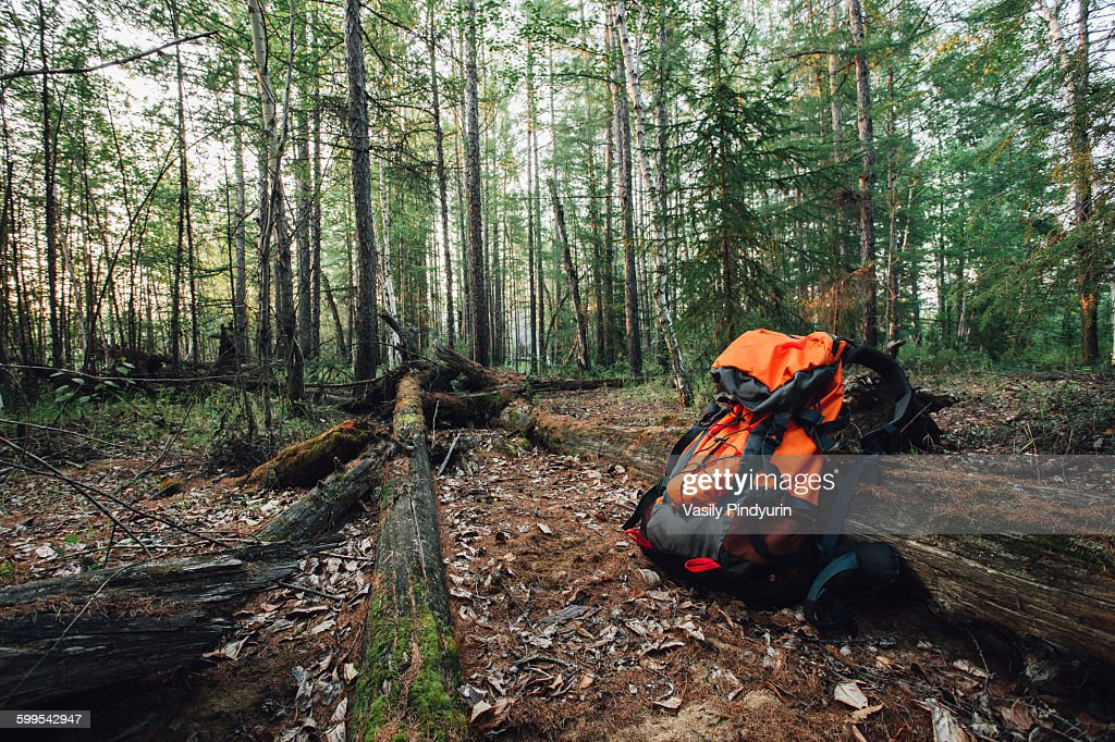 Orange backpack in forest : Stock Photo