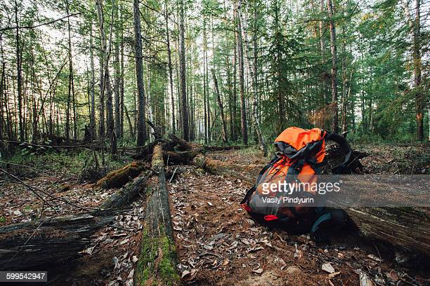 Orange backpack in forest