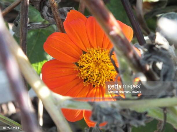 orange bright - noreen braman stock pictures, royalty-free photos & images