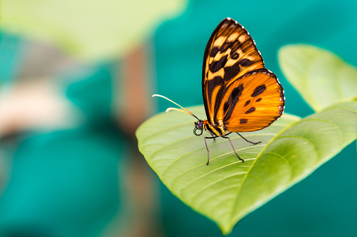 Orange Butterfly Close Up 896416538
