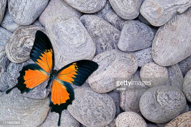 Mariposa de Guijarros naranja