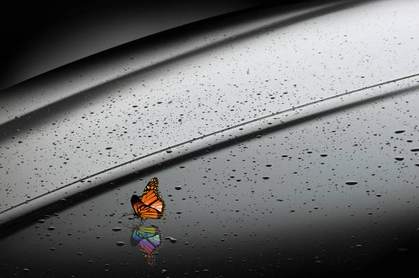Orange Butterfly With Rainbow Reflection Wall Art