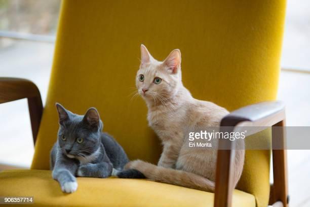 orange cat and grey cat at home. - animal doméstico - fotografias e filmes do acervo
