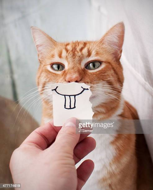 orange cat face - practical joke stock photos and pictures