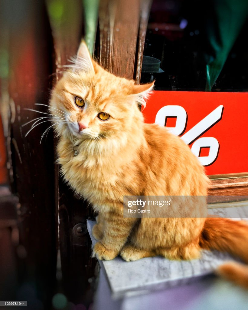 Orange Cat : Stock Photo