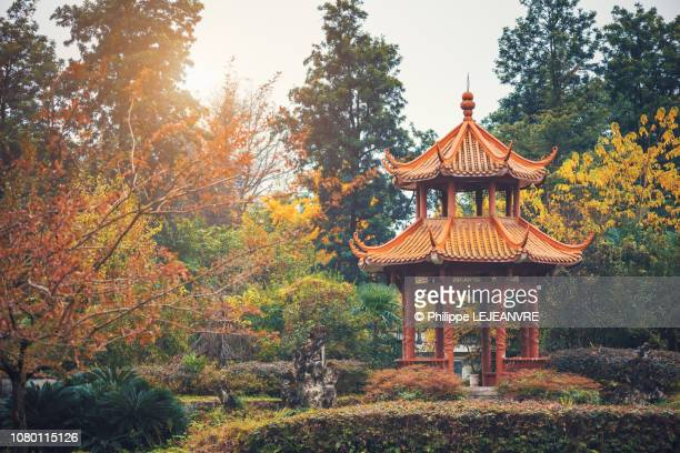 orange color chinese pavilion with autumn colored trees - pagoda stock pictures, royalty-free photos & images