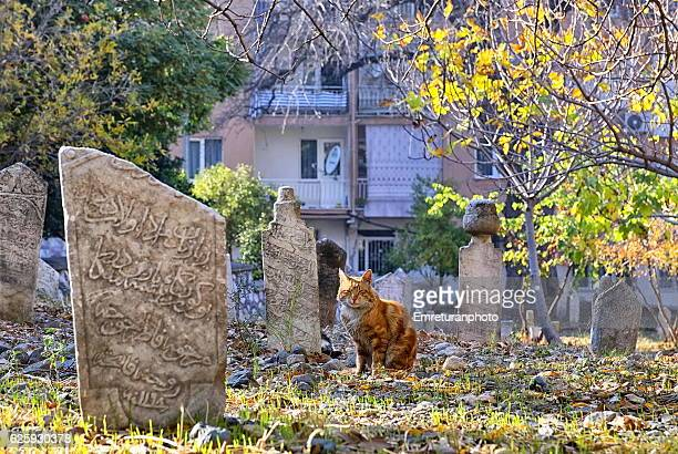 orange colored cat in the cemetery. - emreturanphoto stock pictures, royalty-free photos & images